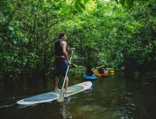 La Guyane – le département le plus boisé de la France